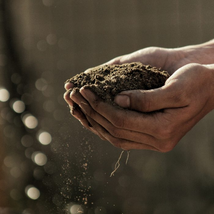 Vocation of the Soil